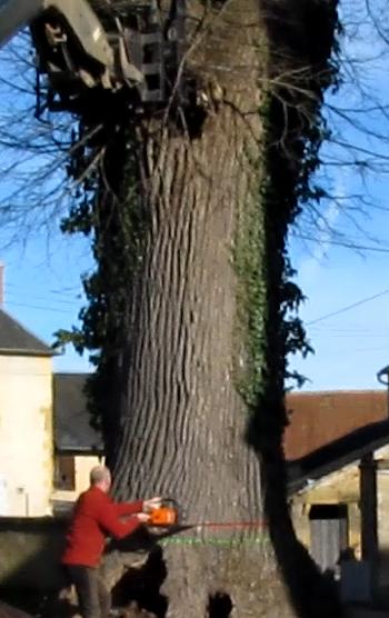 09 découpe du tronc