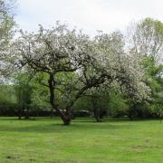 Gd alexandre arbre 1