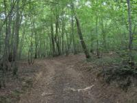 Quarts bois